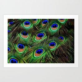 Beautiful photograph of peacock feathers Art Print
