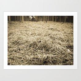 Bracken in the forest Art Print