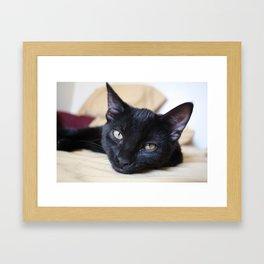 Black Cats are Good Luck Framed Art Print