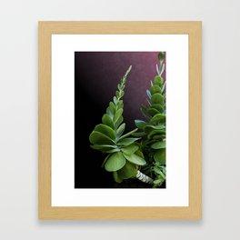 Succulent Spear Framed Art Print