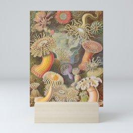 Actiniae Sea Anemones (Haeckel) Mini Art Print