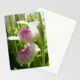 Double-flowered Showy Lady's Slipper Stationery Cards