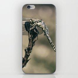 "The little predator ""Orthetrum cancellatum"" iPhone Skin"