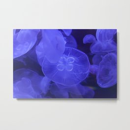 Moon Jelly Fish Metal Print