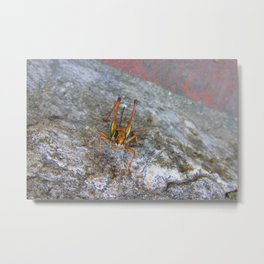 Garish Grasshopper Metal Print