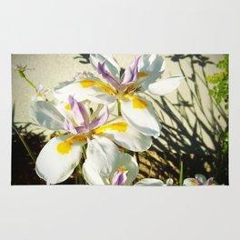 African White Iris DPGP160719a Rug
