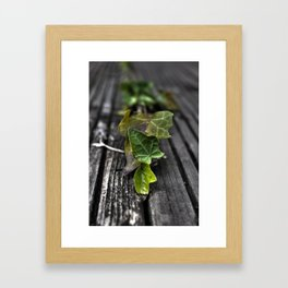 young ivy Framed Art Print