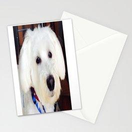 Maxx dogg 2 Stationery Cards