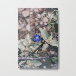Wildflower blue Metal Print