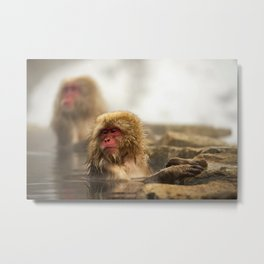 Snow Monkeys on Hot Spring Metal Print