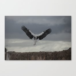 Spread your wings and land Canvas Print