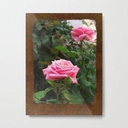 Pink Roses in Anzures 5  Blank P3F0 Metal Print