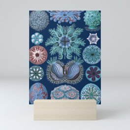 Ernst Haeckel Ascidiae Sea Squirts Mini Art Print