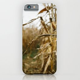 Autumn Cornstalk I iPhone Case