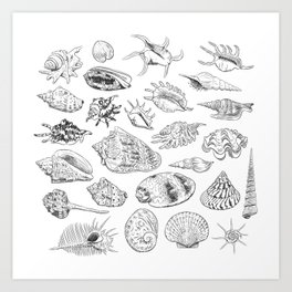 collection of sea shells, black contour on white background Art Print