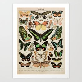Papillon II Vintage French Butterfly Chart by Adolphe Millot Art Print