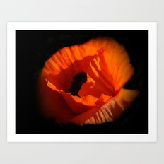 another red poppy on black Art Print