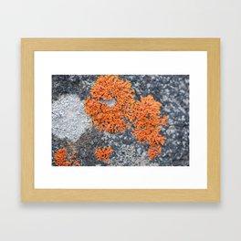 Orange Lichen Framed Art Print