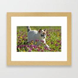 cat among wild flowers Framed Art Print