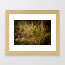 Veadeiros Framed Art Print