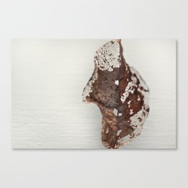 Disqualified Canvas Print