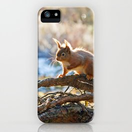 Squirrel on branch iPhone Case