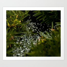 Nature's Ornaments Art Print