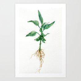 Soybean Art Print