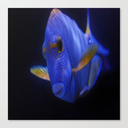 Blue Tang 2 Canvas Print