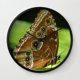 Beautiful Butterfly Wings of Meadow Brown Wall Clock