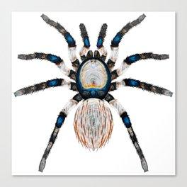 Desert Toned Spider Canvas Print