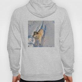 Dogs | Dog | Waiting Dog | Golden Lab Hoody