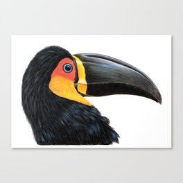 Channel-billed Toucan Canvas Print