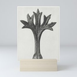 Saxifraga Willkommniana (Willkomm's Saxifrage) leaf enlarged 18 times from Urformen der Kunst (1928) Mini Art Print