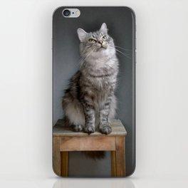 Cat portrait iPhone Skin