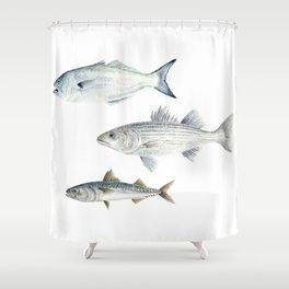 New England Fish Trio Shower Curtain