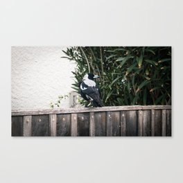 Magpie on Fence Canvas Print