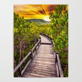 Mangrove Forest Sunset Poster