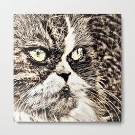 Painted angry looking persian cat head Metal Print