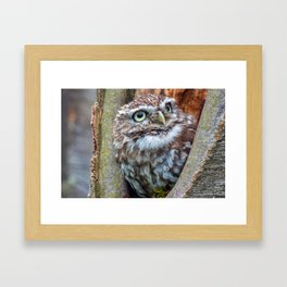 close up owl in the hole Framed Art Print