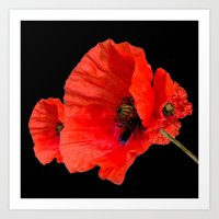 Poppies on Black Art Print