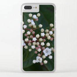 Viburnum tinus buds and flowers Clear iPhone Case