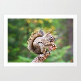 Squirrel and the Mushroom Art Print