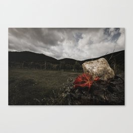 Fall in the Vineyard Canvas Print