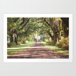 Louisiana Landscape Spanish Moss and Live Oaks Art Print