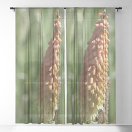 Buds Sheer Curtain