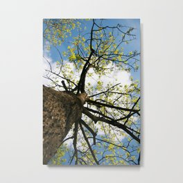 Tree Blossoming in the Blue Sky Metal Print