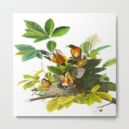 Vintage Scientific Bird Botanical Illustration Metal Print