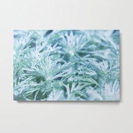 Silver Mound Artemisia 1 Metal Print