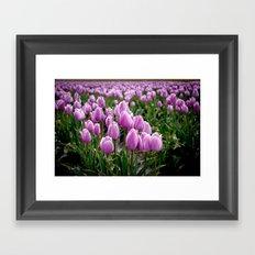 Skagit Valley Tulip Fields Framed Art Print